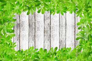 Holzwand mit Rahmen komplett aus Waldmeister