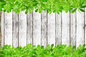 Holzwand mit Rahmen oben und unten aus Waldmeister