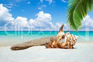 Große Muschel und Treibholz unter Palmen