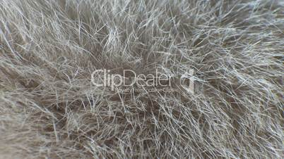 Breeding animal fur