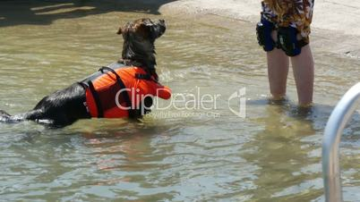 Training of a rescue dog