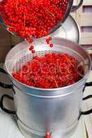 Reife Johannisbeeren in Entsafter geben um Sirup herzustellen