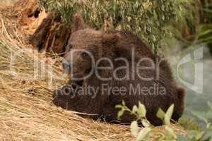 Bear cub turning towards camera beside river