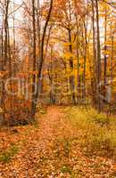 Path into forest covered by autumn leaves