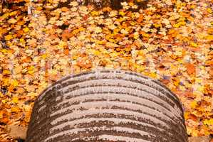 Pipe emptying into autumn leaves on water