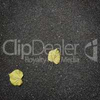 fallen autumn leaves on pure asphalt