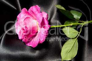 Red rose over black satin. Proper for design of rose oil essential.