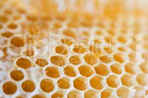 Honeycomb cells close-up with honey