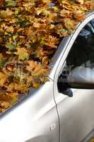 Autumn Car