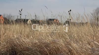 Village behind dry grass field