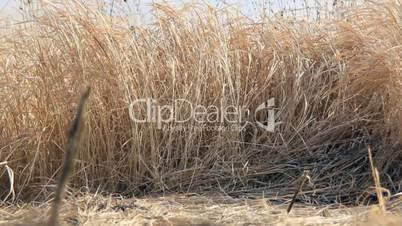 Inside dry grass field