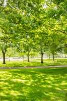 Green park with sun shining