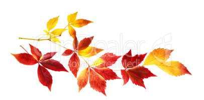 Zweig mit lebendigen herbstlichen Farben