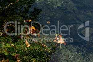 Herbstlaub auf dem See
