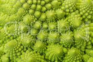 Textured Green Fresh Romanesque Cauliflower