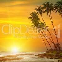 sun rise, tropical palm trees and ocean