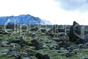 Resistant moss on volcanic rocks in Iceland