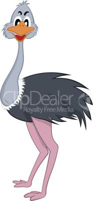 Funny Cartoon Ostrich