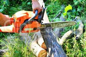 Chainsaw cut wooden logs
