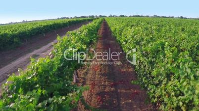 Drone Take Off over a Vineyard. Aerial Video