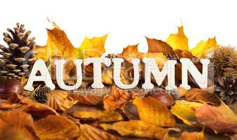 Autumn lettering on dry leaves, white copyspace