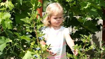 Lovely girl picking fresh blueberries in the garden