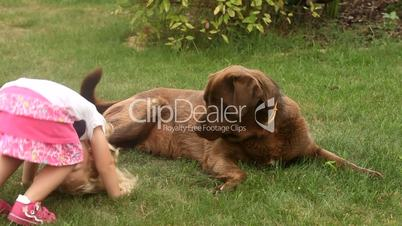 Little girl playing with a Brown Labrador retriever