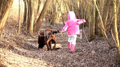 Little girl playing with a Brown Labrador retriever in winter