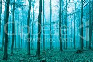 Fantasy Wald im Nebel in Grün