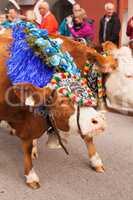 Kufstein/Austria/ Tirol-19.September:Dekorierte Kuh beim Almabtrieb in Kufstein / Austria