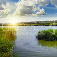 thickets of reeds on the lake and sun