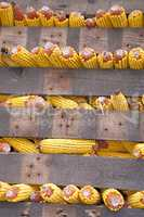 Rows of corn cobs