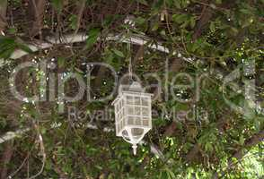 Lamp on the tree summer veranda overgrown with lanterns leading to the sea Lanterns hanging from tree to decorate