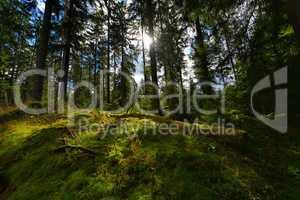 Sonnenschein im Wald mit Moos
