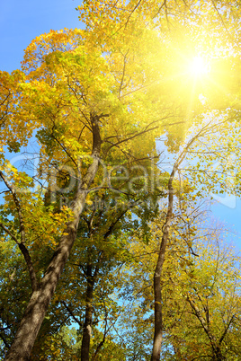 Sunlight through branches of autumn trees