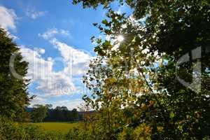 Herbstlaub im Gegenlicht der Sonne