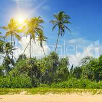 tropical palms on the sandy beach