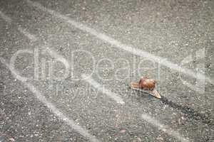 snail moving its own way concept