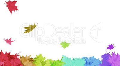 Rainbow Maple Leaves