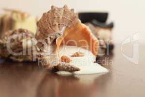 bath accessories over wooden background salt and seashells