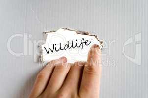 Wildlife text concept