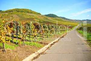 Weinlandschaft bei Kröv