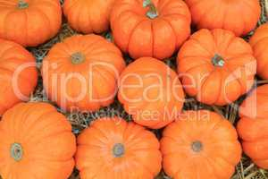 Thanksgiving Pumpkins symbols