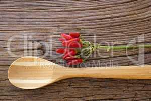 Bund reifer Chilischoten liegen mit Kochlöffel auf Holz