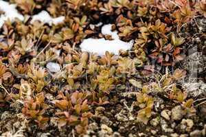 Small plants grow on volcanic underground