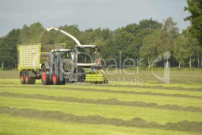 Agriculture, forage harvester and transport grass with green tra