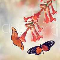 Trumpet Vine and Butterflies