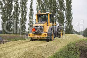 Agriculture shredded corn silage.