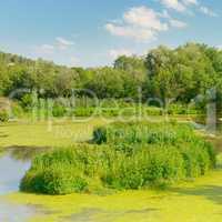 Wetland Lake of the Woods