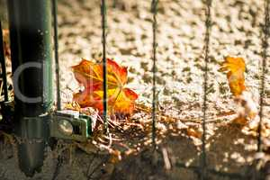 herbstlich verfärbtes Blatt am Zaun